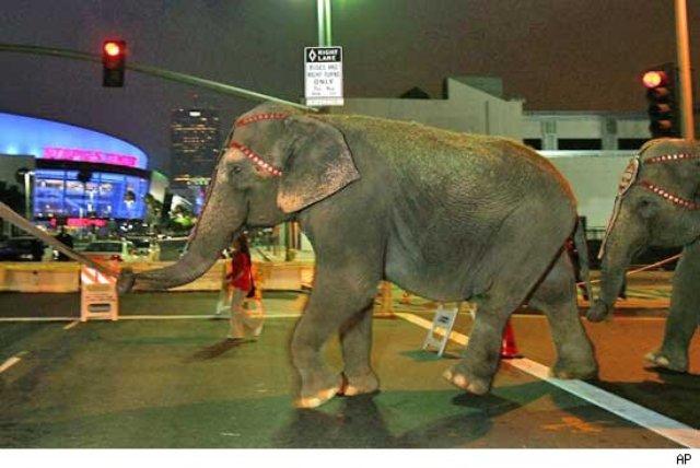Barnum circus in LA during Michael Jackson memorial
